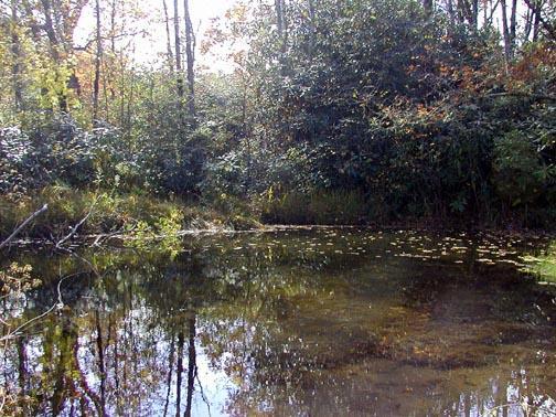 Bog Pond in Autumn<br /> Alarka Laurel, NC<br /> 10/17/04