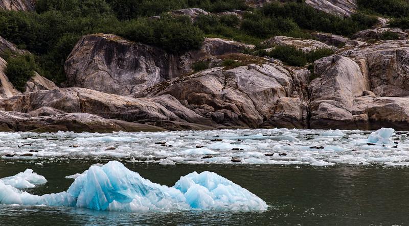 Alaska Tracy Arm Ice-Seals_MG_9992