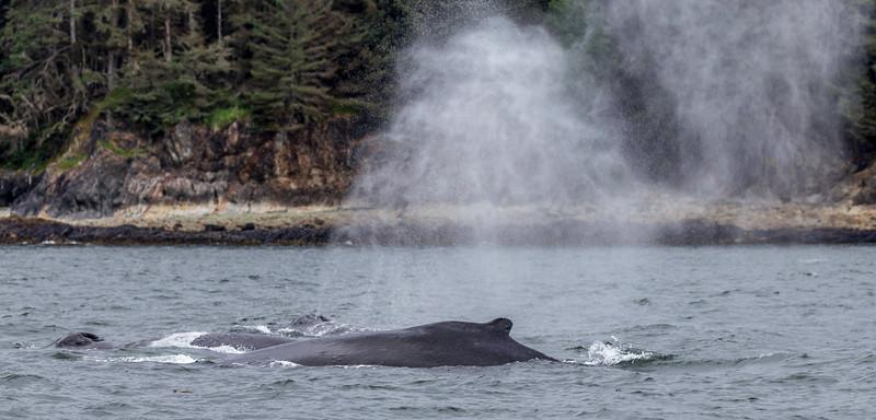 Alaska Juneau Whales 6-26-16_MG_9172
