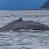 Alaska Juneau Whales 6-26-16_MG_9095