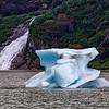 Alaska Juneau Mendenhall Glacier 6-26-16_MG_9227
