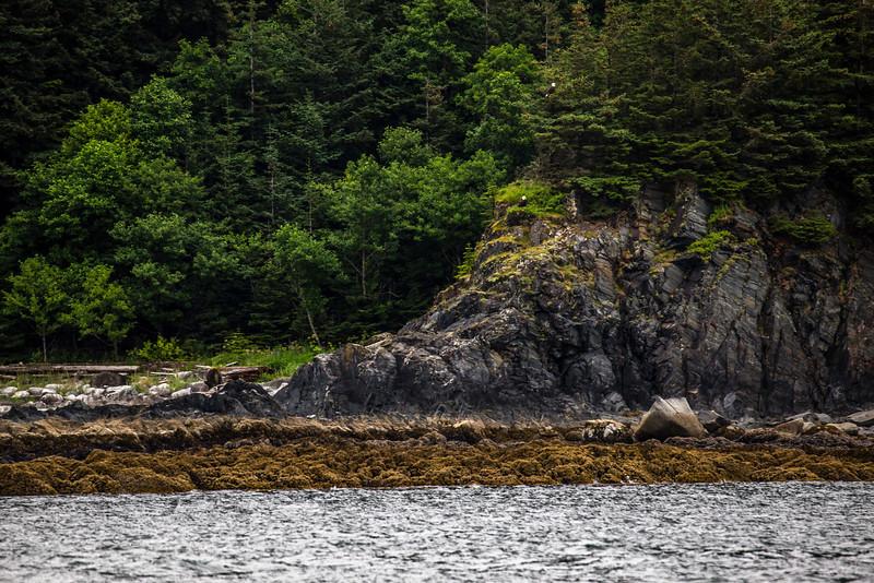 Alaska Juneau Eagles 6-26-16_MG_9162