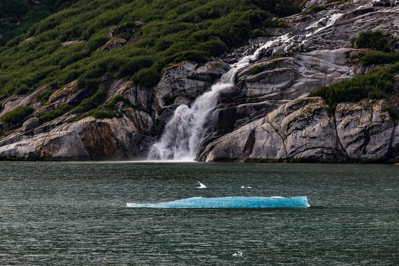 Alaska Tracy Arm Waterfall-Iceburg 6-28-16_MG_9979