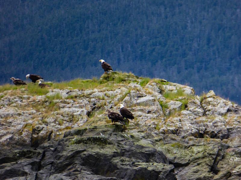 Alaska Juneau Eagles 6-26-16_P1010214