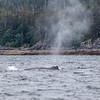 Alaska Juneau Whales 6-26-16_MG_9053