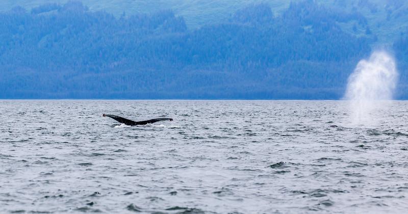Alaska Juneau Whales 6-26-16_MG_9139