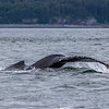 Alaska Juneau Whales 6-26-16_MG_9090