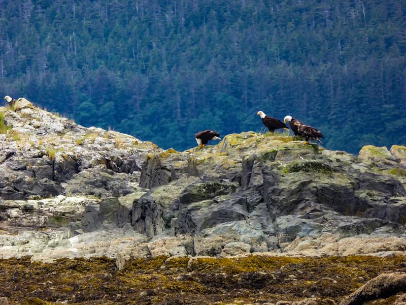 Alaska Juneau Eagles 6-26-16P1010213