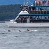 Alaska Juneau Whale Watching cruise 6-26-16_MG_9069