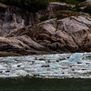 Alaska Tracy Arm Iceflow-Seals 6-28-16_MG_9996