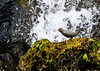 Dipper<br /> Walker Cove, Yes Bay, Alaska Wilderness Adventure Cruise