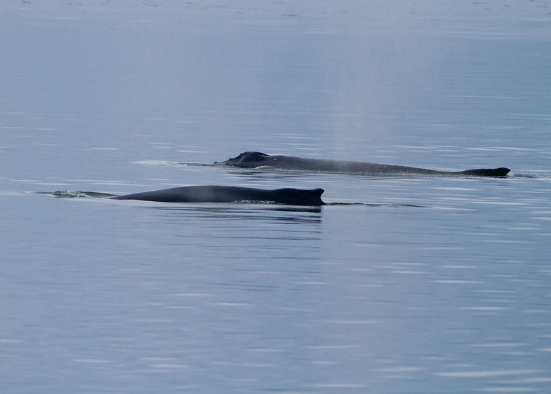 Humpback Whale mother and calf<br /> Frederick Sound, Alaska Wilderness Adventure Cruise