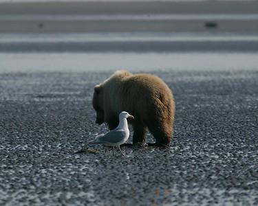 Alaska Bears 2007