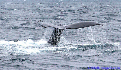 Another Humpback....