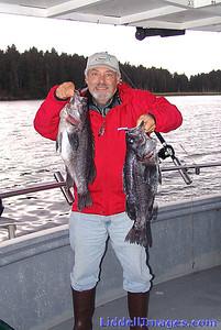 Rock Bass (Sea Bass)......... fun to catch......