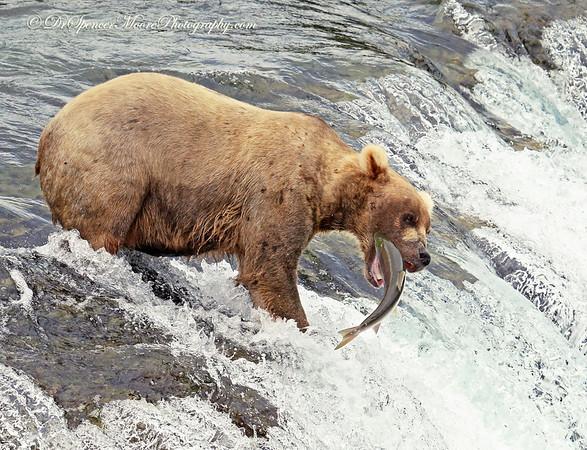 Alaska July 2015