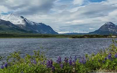 On the Old Denali Highway