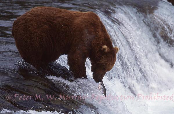 Alaska, Yukon, North West Territories