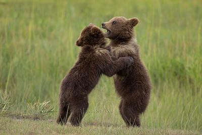 20130719_1_Bears_204_1
