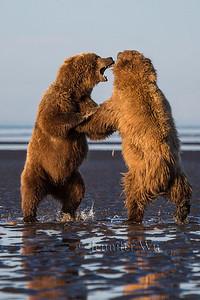 20130720_2_Bears_014
