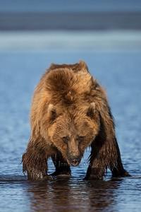 20130721_1_Bears_155