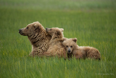 20150627_Bears_094