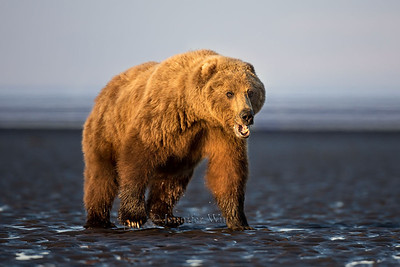 20130720_1_Bears_120