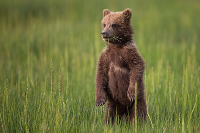 20130719_1_Bears_166