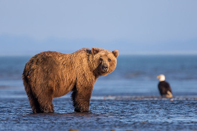 20130723_2_Bears_121