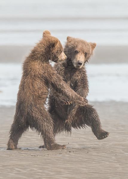 """""""Dancing Bears"""""""