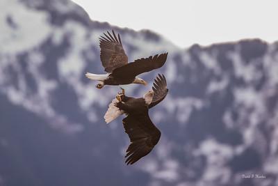 Battle In The Sky