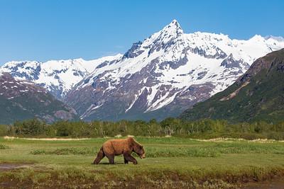 Kukak Bay, Alaska