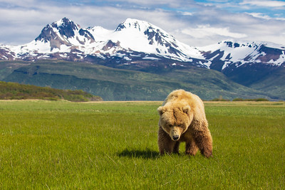Majestic Alaska