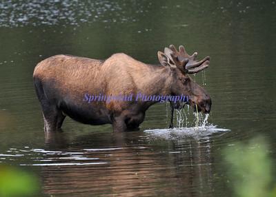 Alaskan Nature 2011