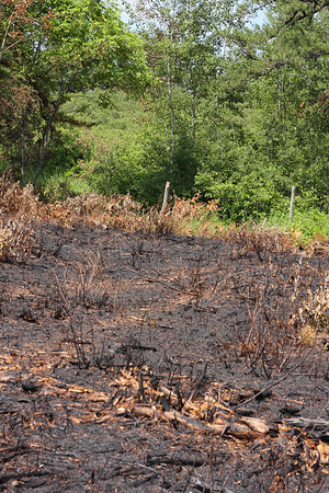 The edge of a burn zone in the Albany Pine Bush, a fire-maintained pine barrens in upstate New York.