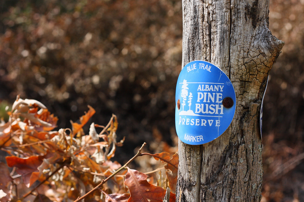 A trail marker in the Albany Pine Bush Preserve, along the edge of a controlled burn zone.