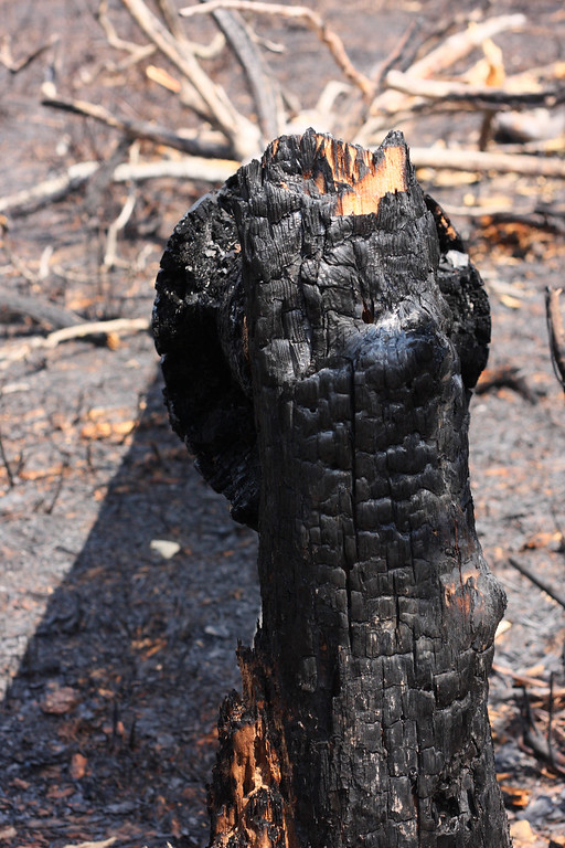 A burned tree stump in the controlled burn zone.