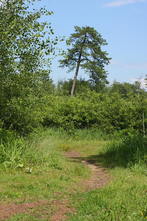 A trail through the Albany Pine Bush.