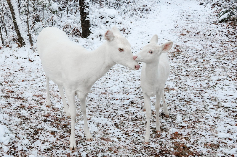 Frostys First Snow 6 (Togetherness)