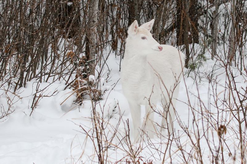 Albinos - December 2017 17