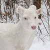 Albinos - December 2017 18