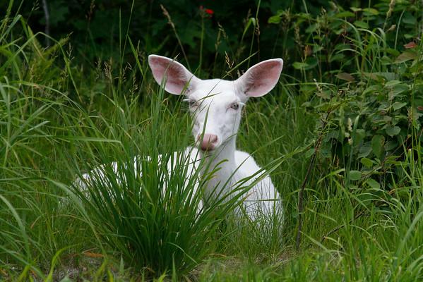 Splendor in the Grass