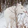 Albinos - December 2017 10