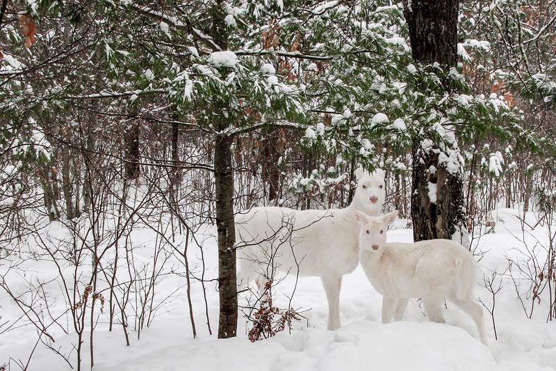 Snow Angels  4