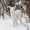 Albinos - December 2017 25