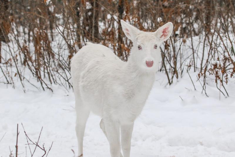 Albinos - December 2017 21