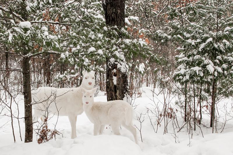 Snow Angels  2