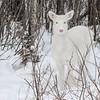 Albinos - December 2017 16