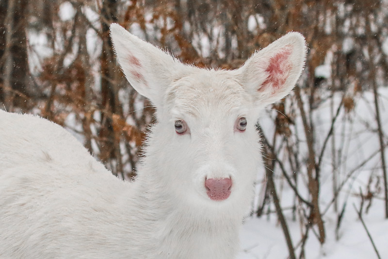Albinos - December 2017 23