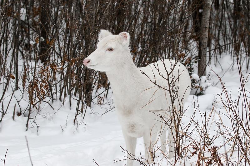 Albinos - December 2017 13